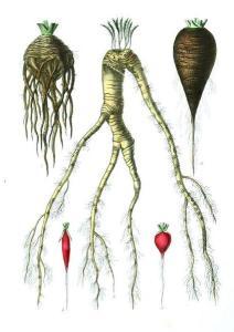 funky-root-veg-cr1.jpg